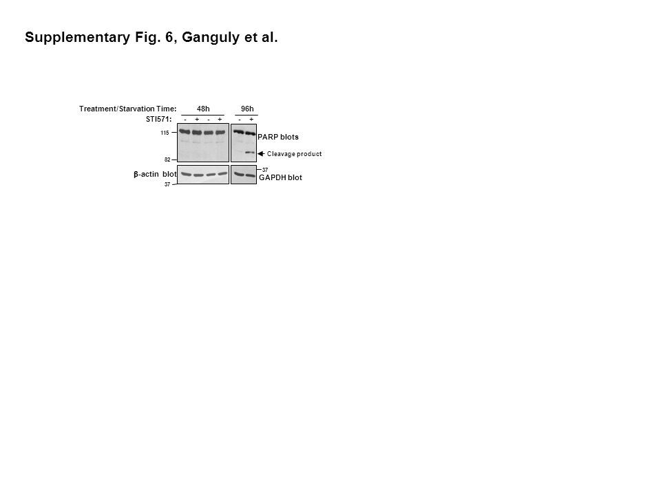 Supplementary Fig. 6, Ganguly et al.
