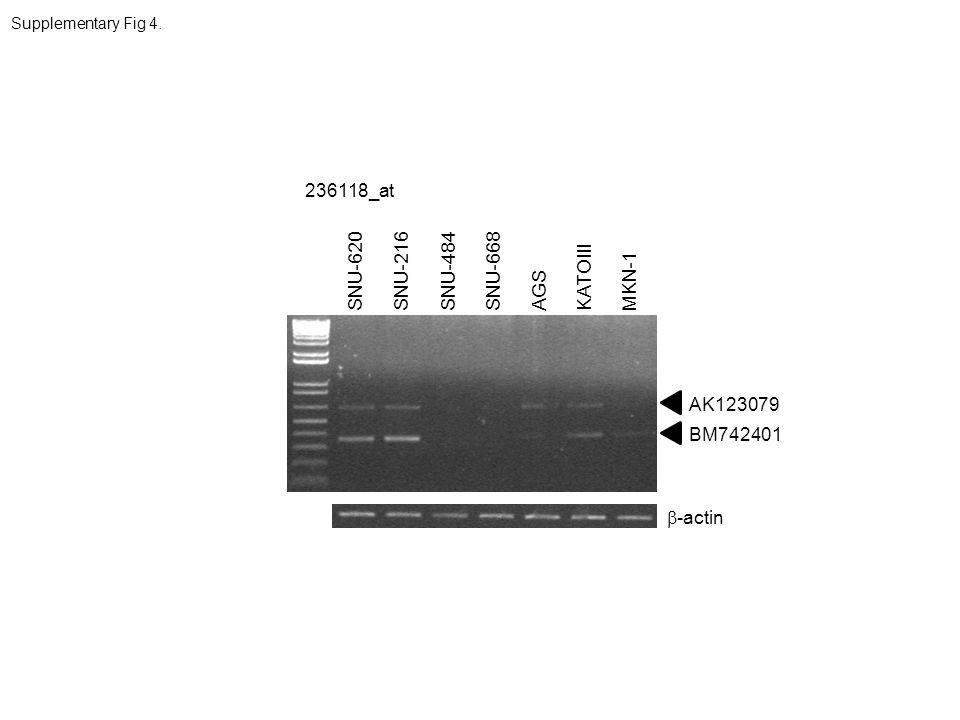 Supplementary Fig 4. 236118_at -actin BM742401 SNU-620SNU-216SNU-484AGSKATOIIIMKN-1SNU-668 AK123079