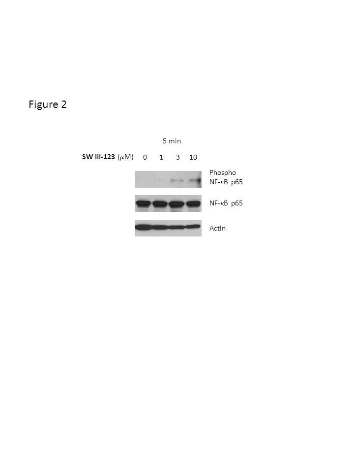 Actin Phospho NF- B p65 SW III-123 ( M) 0 1 3 10 5 min Figure 2