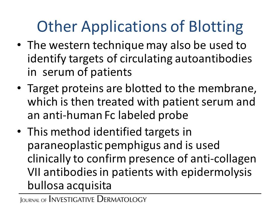 Other Applications of Blotting The western technique may also be used to identify targets of circulating autoantibodies in serum of patients Target proteins are blotted to the membrane, which is then treated with patient serum and an anti-human Fc labeled probe This method identified targets in paraneoplastic pemphigus and is used clinically to confirm presence of anti-collagen VII antibodies in patients with epidermolysis bullosa acquisita
