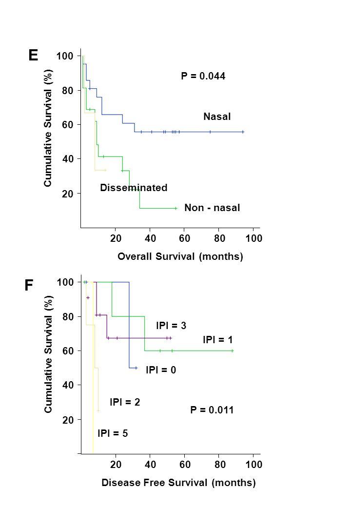 204060 80 100 20 40 60 80 100 Disease Free Survival (months) Cumulative Survival (%) P = 0.011 IPI = 1 IPI = 0 IPI = 2 IPI = 3 IPI = 5 204060 80 100 20 40 60 80 100 Overall Survival (months) Cumulative Survival (%) Nasal Non - nasal Disseminated P = 0.044 E F