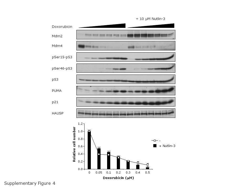 Mdm2 Mdm4 pSer15-p53 pSer46-p53 p53 PUMA p21 HAUSP Doxorubicin + 10 µM Nutlin-3 Supplementary Figure 4