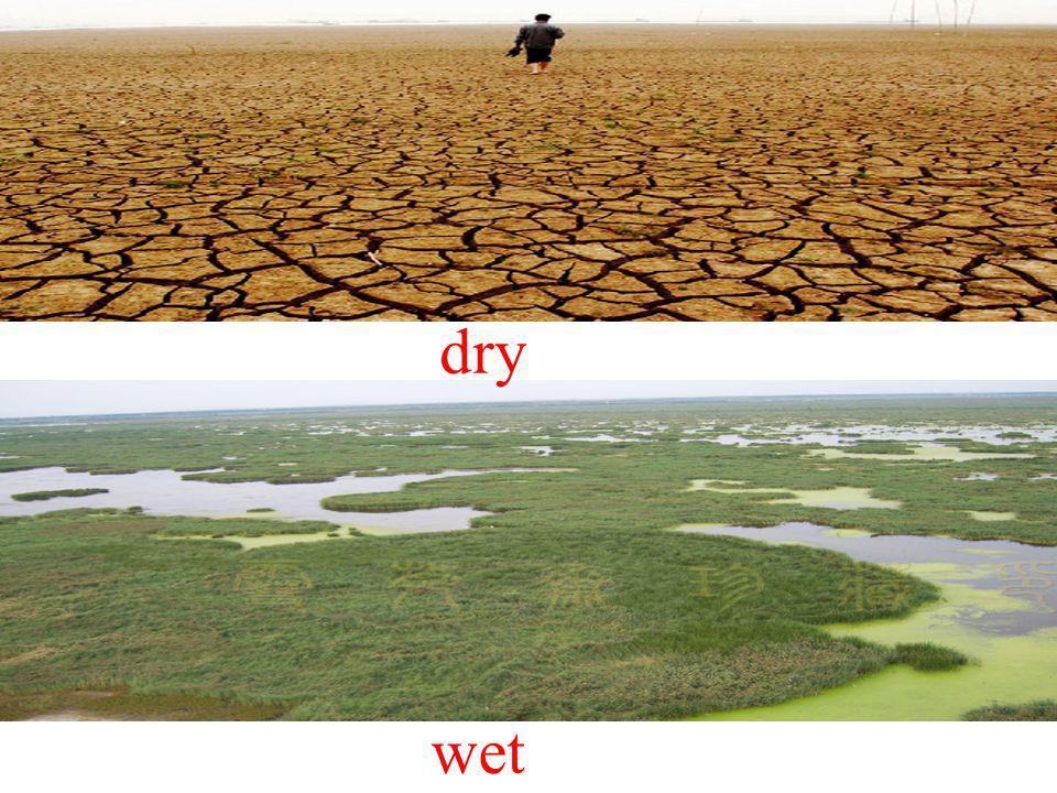 dry wet