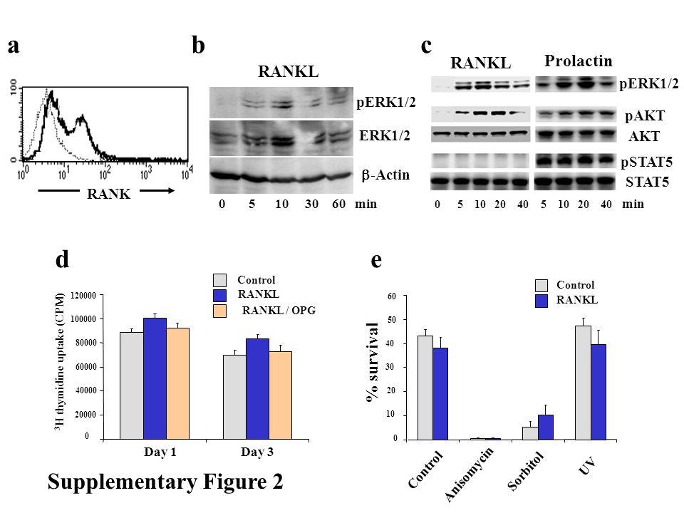 ac d Supplementary Figure 2 Day 3Day 1 3 H thymidine uptake (CPM) 0 40000 60000 80000 100000 120000 20000 RANKL RANKL / OPG Control Anisomycin Control