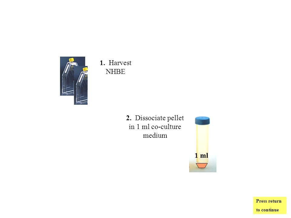 2. Dissociate pellet in 1 ml co-culture medium 1 ml 1. Harvest NHBE Press return to continue