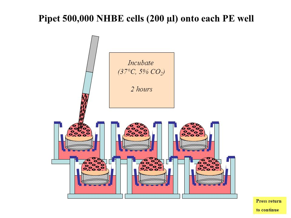Pipet 500,000 NHBE cells (200 µl) onto each PE well Incubate (37°C, 5% CO 2 ) 2 hours Press return to continue