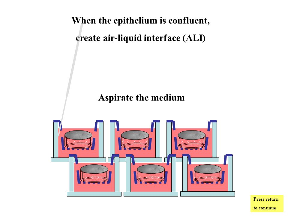When the epithelium is confluent, create air-liquid interface (ALI) Aspirate the medium Press return to continue