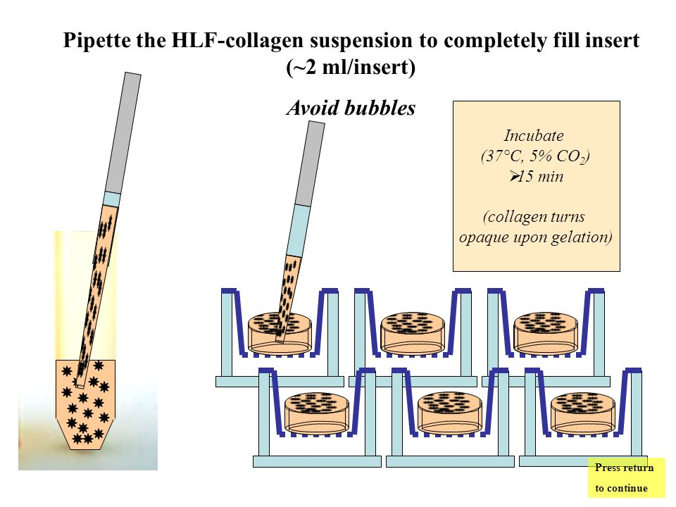 Pipette the HLF-collagen suspension to completely fill insert (~2 ml/insert) Avoid bubbles Incubate (37°C, 5% CO 2 ) 15 min (collagen turns opaque upon gelation) Press return to continue