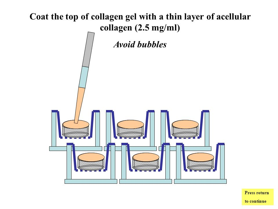 Coat the top of collagen gel with a thin layer of acellular collagen (2.5 mg/ml) Avoid bubbles Press return to continue