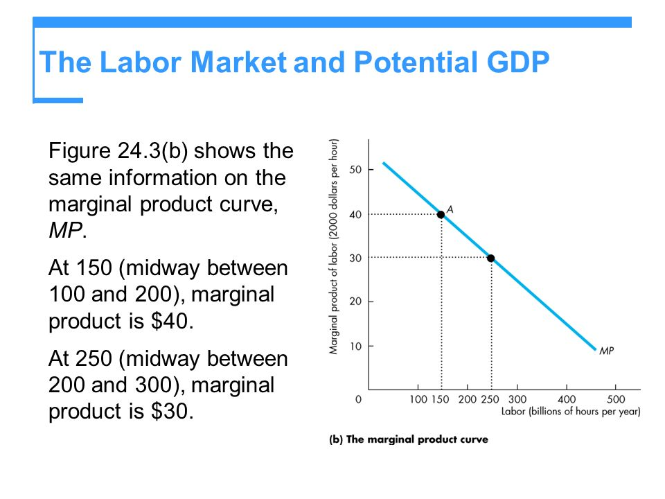 The Labor Market and Potential GDP Figure 24.3(b) shows the same information on the marginal product curve, MP. At 150 (midway between 100 and 200), m