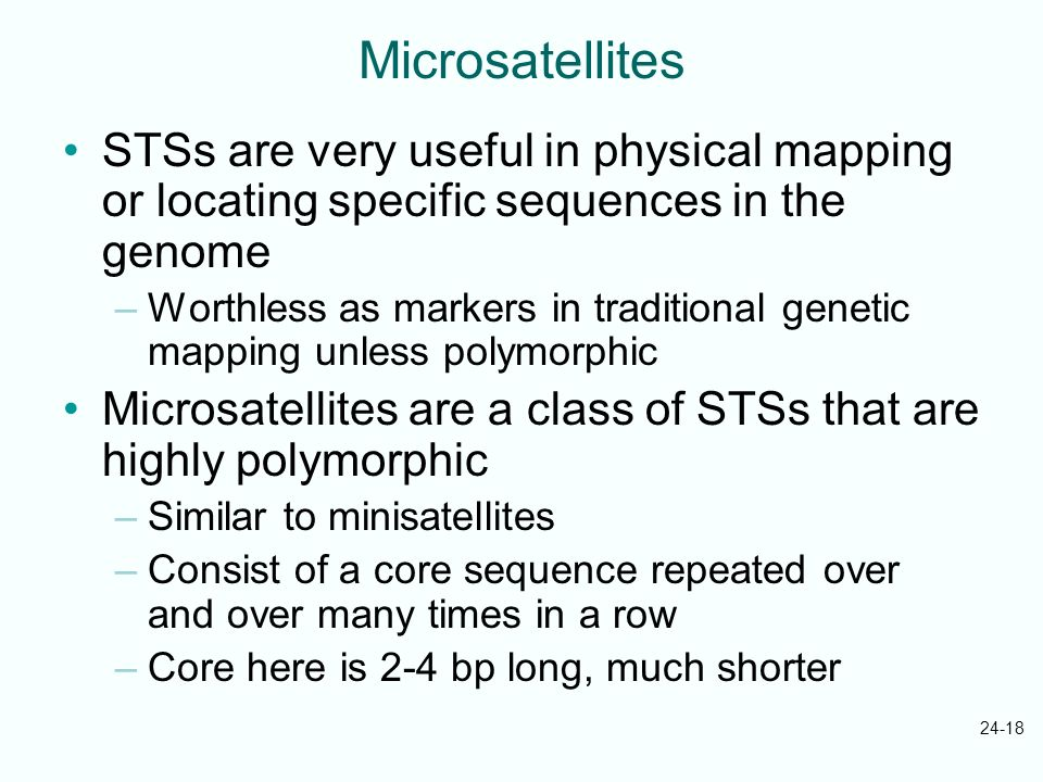 24-18 Microsatellites STSs are very useful in physical mapping or locating specific sequences in the genome –Worthless as markers in traditional genet