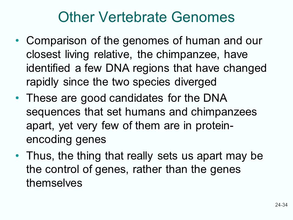 24-34 Other Vertebrate Genomes Comparison of the genomes of human and our closest living relative, the chimpanzee, have identified a few DNA regions t