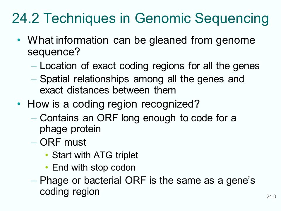24-8 24.2 Techniques in Genomic Sequencing What information can be gleaned from genome sequence? –Location of exact coding regions for all the genes –