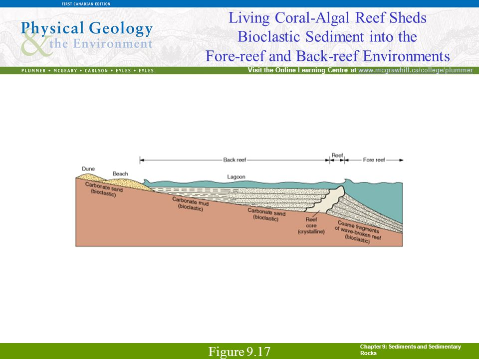 Chapter 9: Sediments and Sedimentary Rocks Visit the Online Learning Centre at www.mcgrawhill.ca/college/plummerwww.mcgrawhill.ca/college/plummer Living Coral-Algal Reef Sheds Bioclastic Sediment into the Fore-reef and Back-reef Environments Figure 9.17