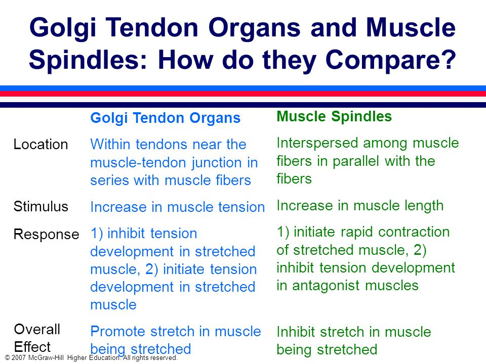 © 2007 McGraw-Hill Higher Education. All rights reserved. Golgi Tendon Organs and Muscle Spindles: How do they Compare? Overall Effect Golgi Tendon Or