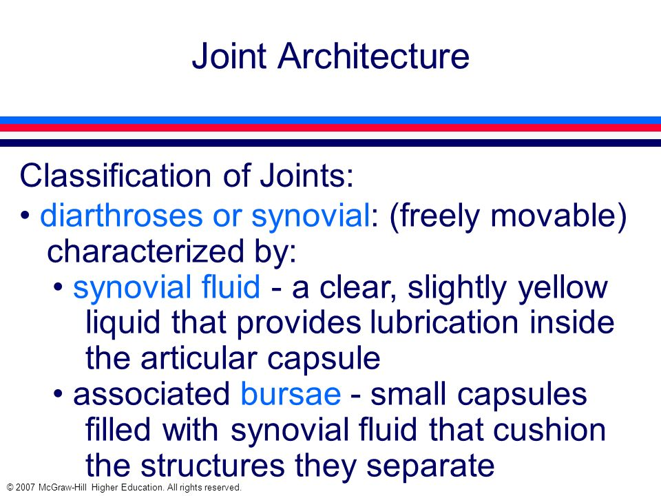 © 2007 McGraw-Hill Higher Education. All rights reserved. Joint Architecture Classification of Joints: diarthroses or synovial: (freely movable) chara
