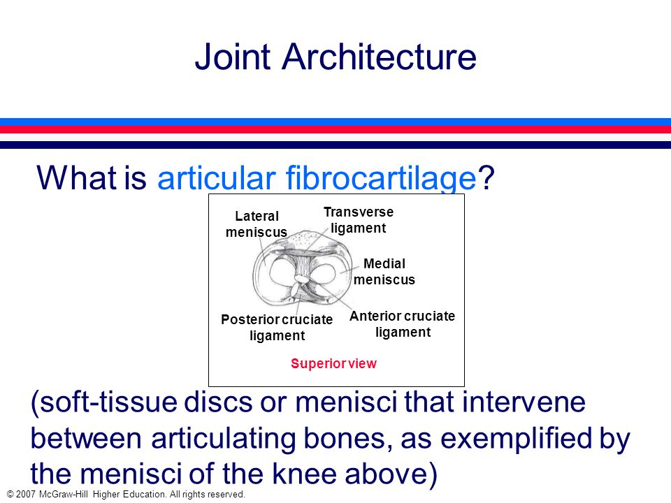 © 2007 McGraw-Hill Higher Education. All rights reserved. Joint Architecture What is articular fibrocartilage? (soft-tissue discs or menisci that inte