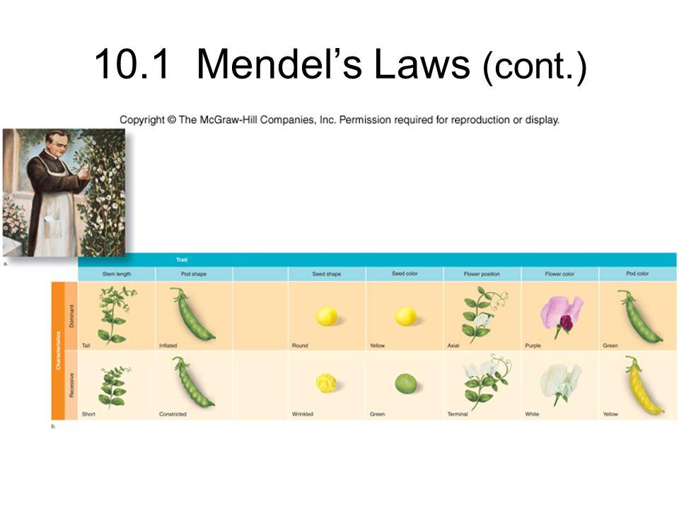 10.1 Mendels Laws (cont.)