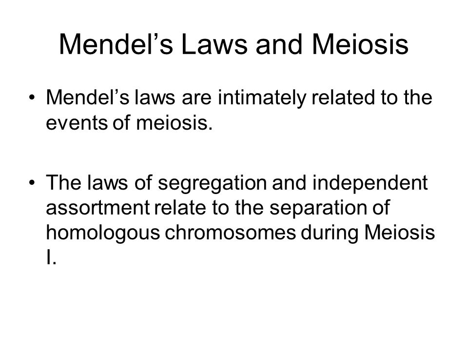 Mendels Laws and Meiosis Mendels laws are intimately related to the events of meiosis. The laws of segregation and independent assortment relate to th