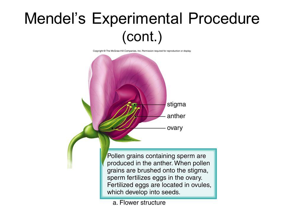 Mendels Experimental Procedure (cont.)