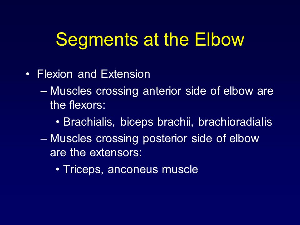 Segments at the Elbow Flexion and Extension –Muscles crossing anterior side of elbow are the flexors: Brachialis, biceps brachii, brachioradialis –Mus