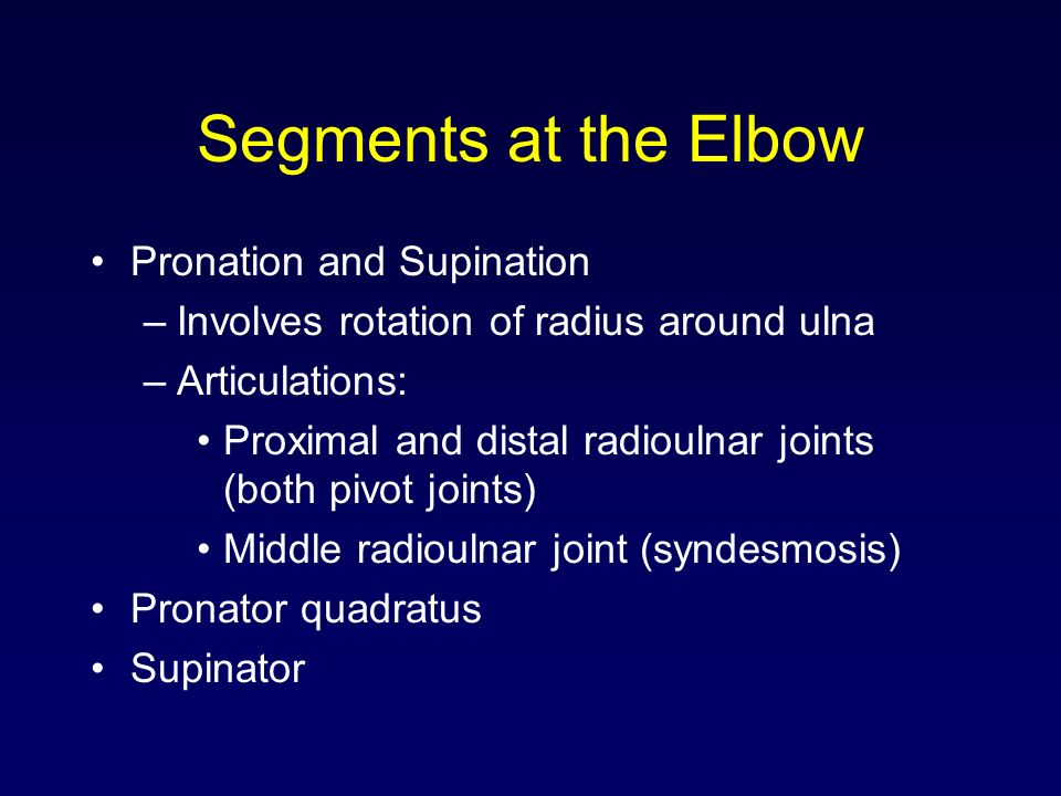 Segments at the Elbow Pronation and Supination –Involves rotation of radius around ulna –Articulations: Proximal and distal radioulnar joints (both pi