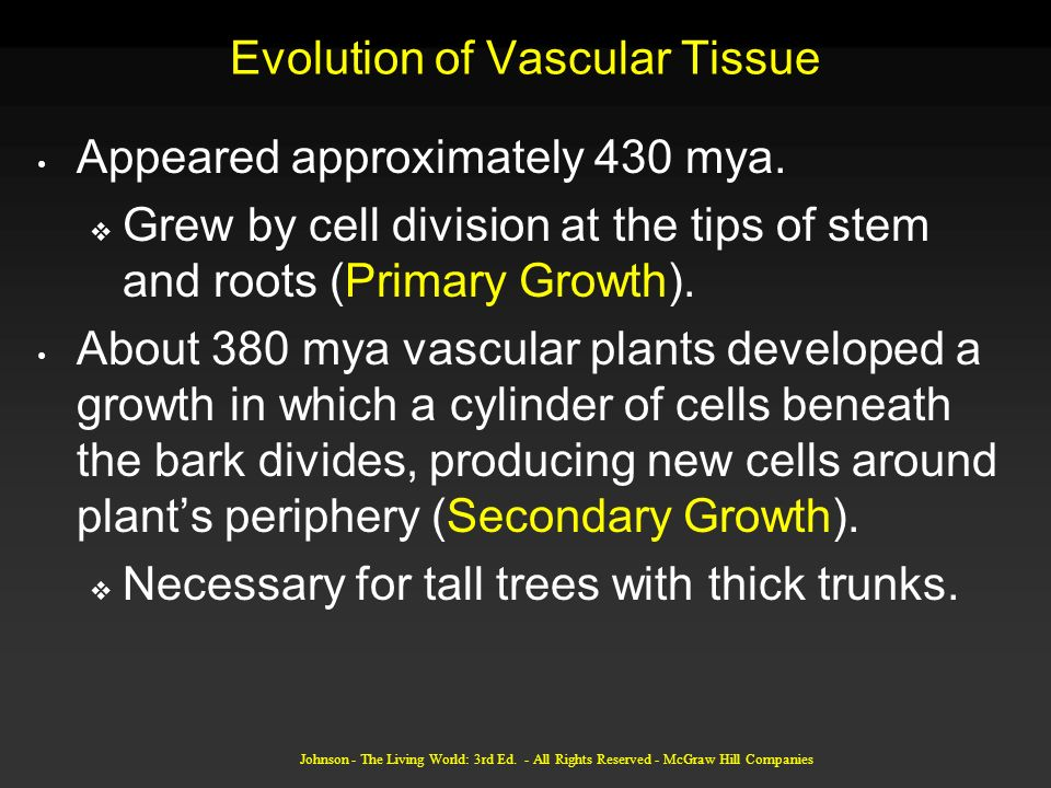 Johnson - The Living World: 3rd Ed. - All Rights Reserved - McGraw Hill Companies Evolution of Vascular Tissue Appeared approximately 430 mya. Grew by