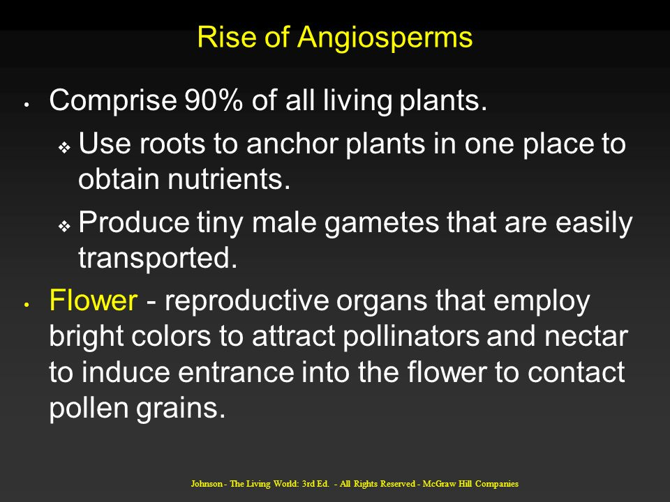 Johnson - The Living World: 3rd Ed. - All Rights Reserved - McGraw Hill Companies Rise of Angiosperms Comprise 90% of all living plants. Use roots to