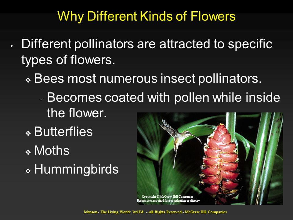 Johnson - The Living World: 3rd Ed. - All Rights Reserved - McGraw Hill Companies Why Different Kinds of Flowers Different pollinators are attracted t