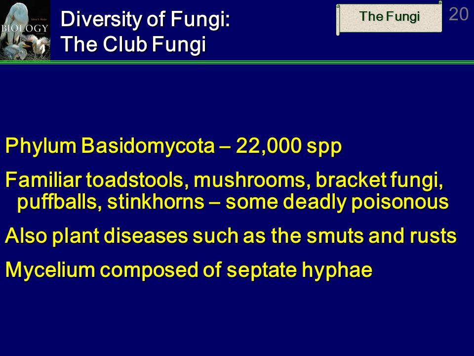 The Fungi 20 Diversity of Fungi: The Club Fungi Phylum Basidomycota – 22,000 spp Familiar toadstools, mushrooms, bracket fungi, puffballs, stinkhorns