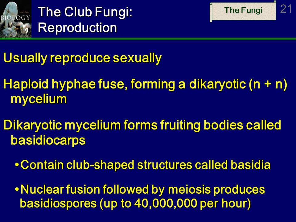 The Fungi 21 The Club Fungi: Reproduction Usually reproduce sexually Haploid hyphae fuse, forming a dikaryotic (n + n) mycelium Dikaryotic mycelium fo