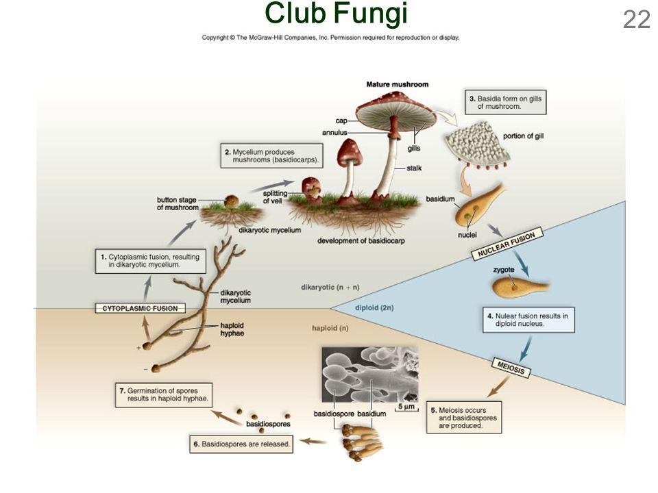 22 Club Fungi