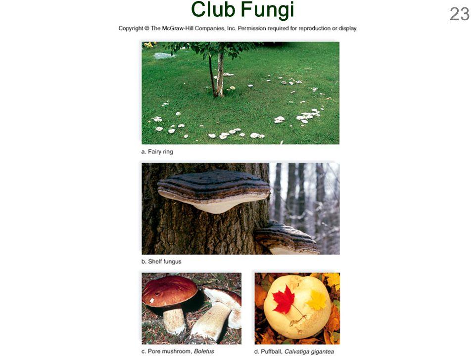 23 Club Fungi
