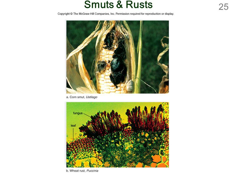 25 Smuts & Rusts