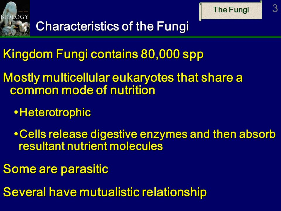 The Fungi 4 Structure of Fungi Body (thallus) of most fungi is multicellular mycelium (yeasts are unicellular) Consists of a vast network of thread-like hyphae Consists of a vast network of thread-like hyphae ­Septate fungi have hyphae with cross walls ­Nonseptate fungi are multinucleated ­Hyphae grow from tip Give the mycelium a large surface area per unit volume Give the mycelium a large surface area per unit volume Cell walls of chitin, like insect exoskeleton Excess food stored as glycogen as in animals Possibly evolved from red algae - both lack flagella