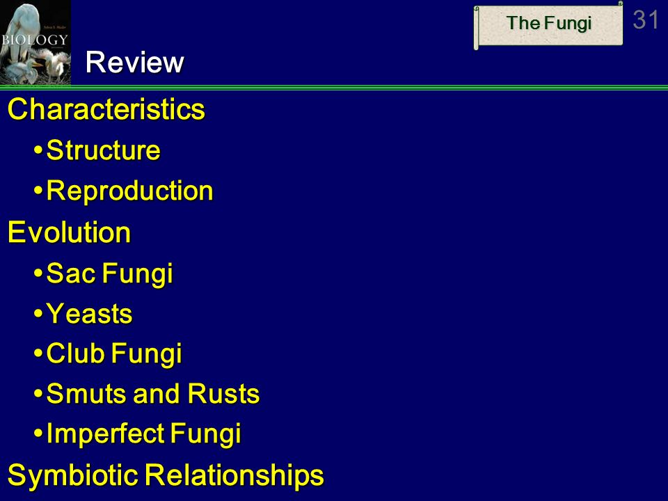 The Fungi 31ReviewCharacteristics Structure Structure Reproduction ReproductionEvolution Sac Fungi Sac Fungi Yeasts Yeasts Club Fungi Club Fungi Smuts