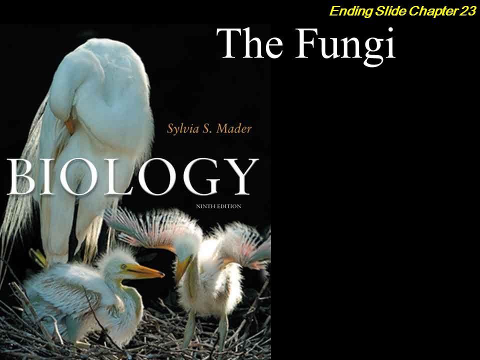 The Fungi Ending Slide Chapter 23