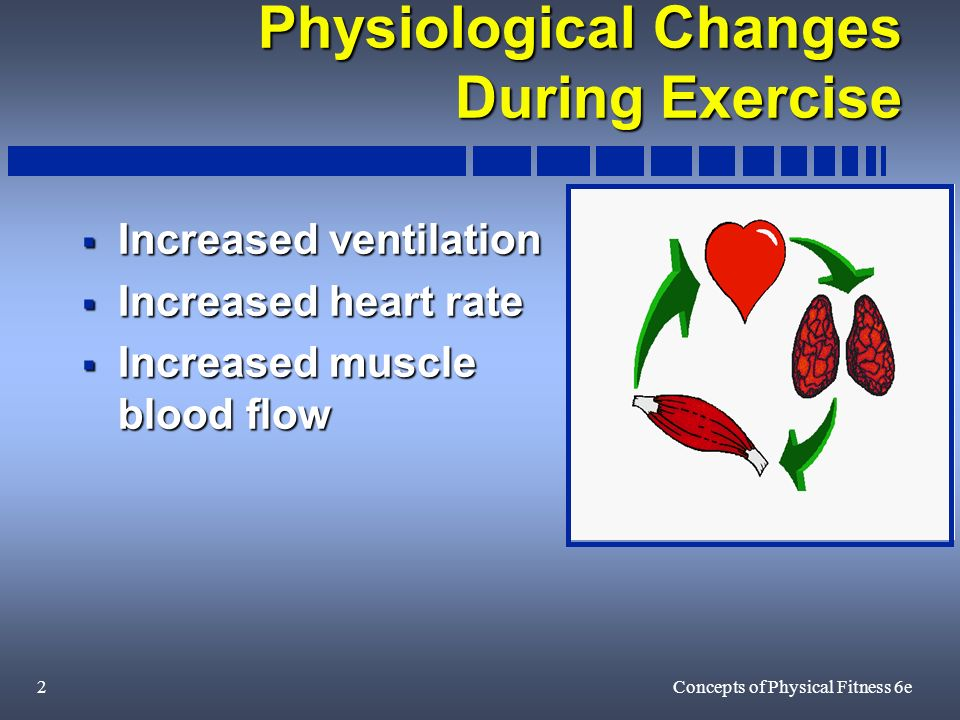 2Concepts of Physical Fitness 6e Physiological Changes During Exercise Increased ventilation Increased ventilation Increased heart rate Increased heart rate Increased muscle blood flow Increased muscle blood flow