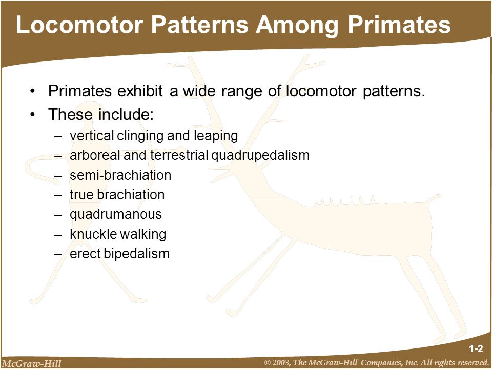McGraw-Hill © 2003, The McGraw-Hill Companies, Inc. All rights reserved. 1-2 Locomotor Patterns Among Primates Primates exhibit a wide range of locomo