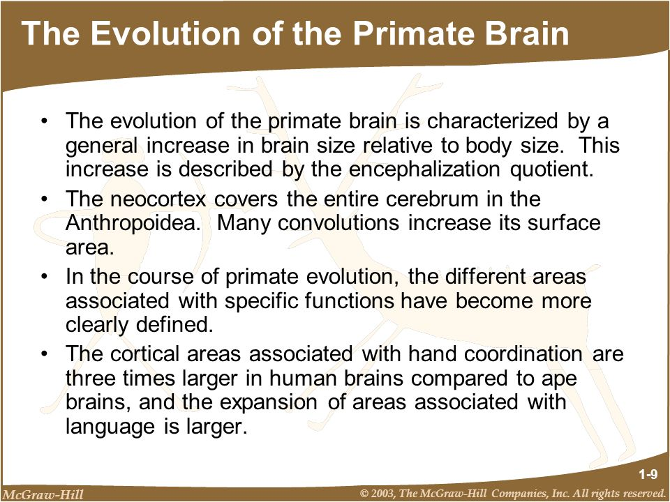 McGraw-Hill © 2003, The McGraw-Hill Companies, Inc. All rights reserved. 1-9 The Evolution of the Primate Brain The evolution of the primate brain is