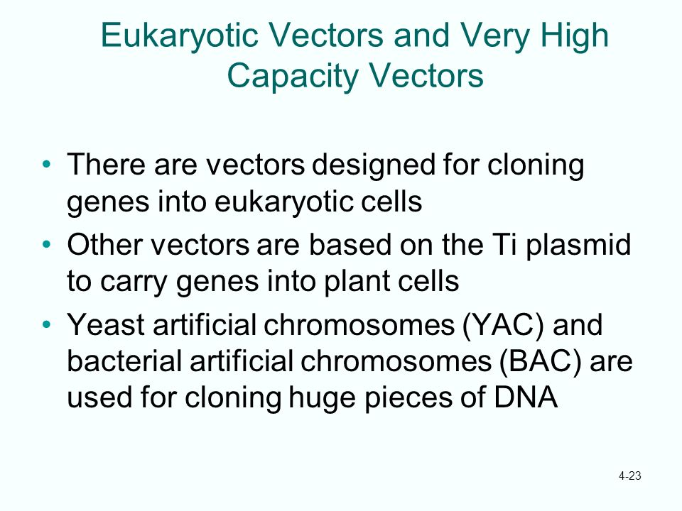 4-23 Eukaryotic Vectors and Very High Capacity Vectors There are vectors designed for cloning genes into eukaryotic cells Other vectors are based on t