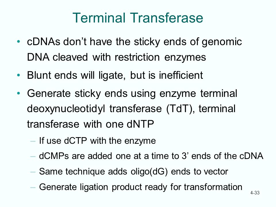 4-33 Terminal Transferase cDNAs dont have the sticky ends of genomic DNA cleaved with restriction enzymes Blunt ends will ligate, but is inefficient G