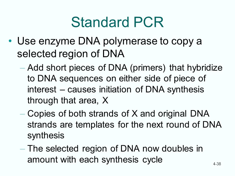 4-38 Standard PCR Use enzyme DNA polymerase to copy a selected region of DNA –Add short pieces of DNA (primers) that hybridize to DNA sequences on eit