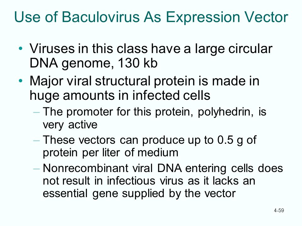 4-59 Use of Baculovirus As Expression Vector Viruses in this class have a large circular DNA genome, 130 kb Major viral structural protein is made in