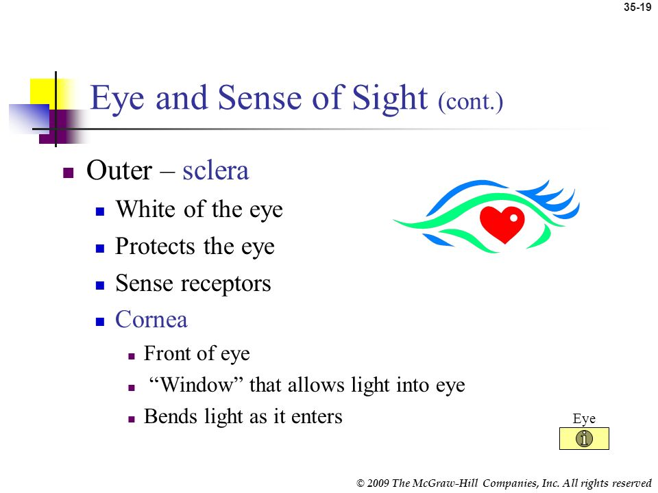 © 2009 The McGraw-Hill Companies, Inc. All rights reserved 35-18 Eye and Sense of Sight Vision system Eyes Optic nerves Vision centers in the brain Ac