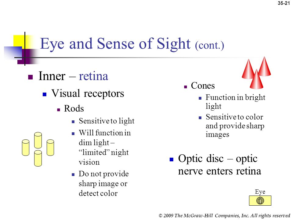 © 2009 The McGraw-Hill Companies, Inc. All rights reserved 35-20 Eye and Sense of Sight (cont.) Middle – choroid Contains blood vessels Iris Colored p