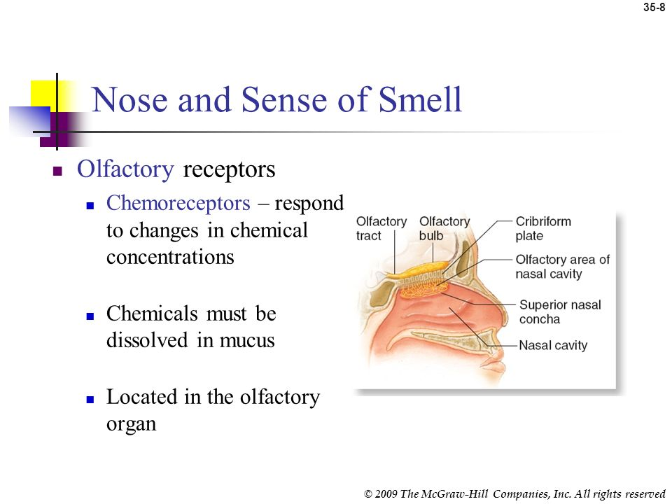 © 2009 The McGraw-Hill Companies, Inc. All rights reserved 35-7 Introduction Special senses Sensory receptors located in head Nose – smell Tongue – ta