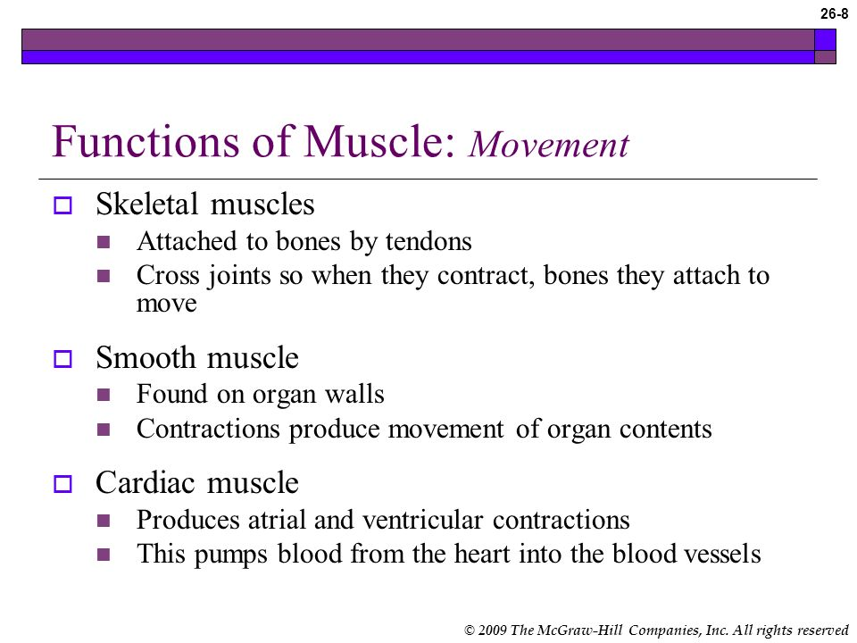 © 2009 The McGraw-Hill Companies, Inc. All rights reserved 26-7 Skeletal Muscle