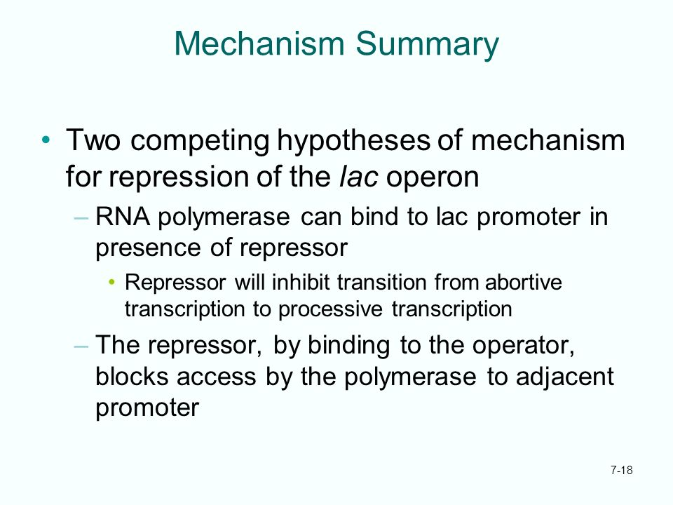 7-18 Mechanism Summary Two competing hypotheses of mechanism for repression of the lac operon –RNA polymerase can bind to lac promoter in presence of