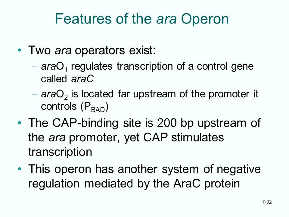 7-32 Features of the ara Operon Two ara operators exist: –araO 1 regulates transcription of a control gene called araC –araO 2 is located far upstream